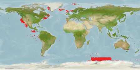 Blue whale habitat map - photo#19